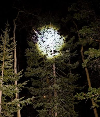 This is an image of a flashlight beam beaming into the treetops at night.